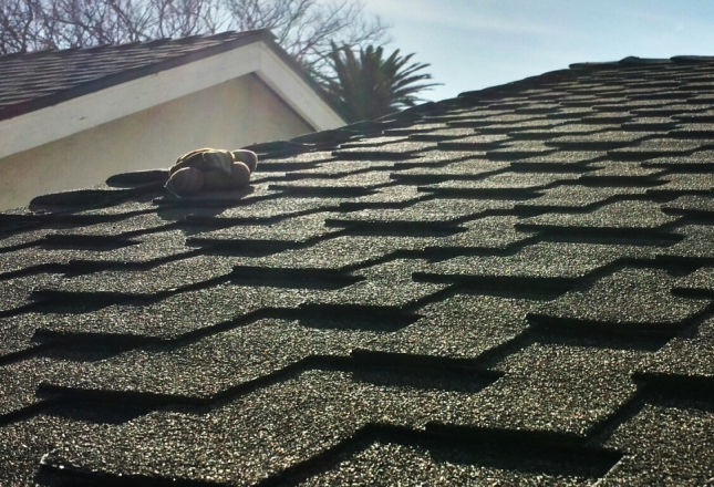 Holy Disemboweled Ninja Turtles, Batman, the shingles on this roof look, well, OK, actually!